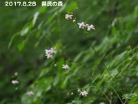 renge_s1.jpg